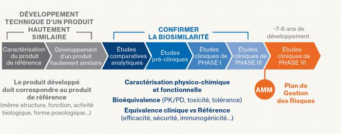 Récapitulatif des phases de développement des biosimilaires